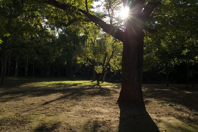 円山公園逆光