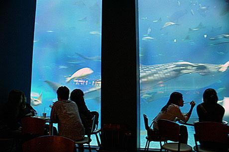 美ら海 カフェ