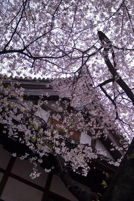 地蔵桜屋根