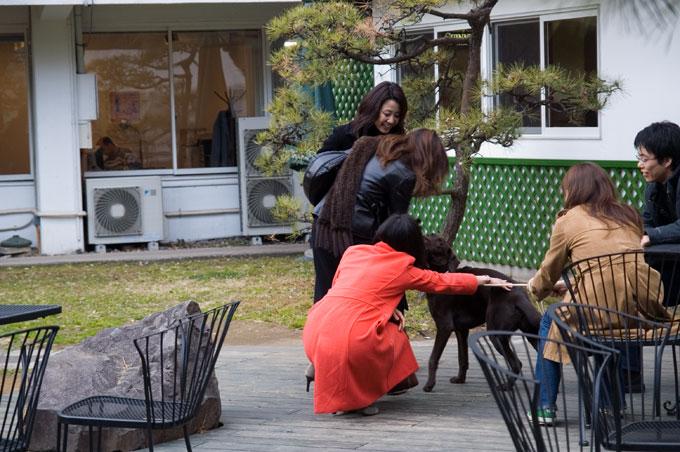 日仏学院-3犬遊び