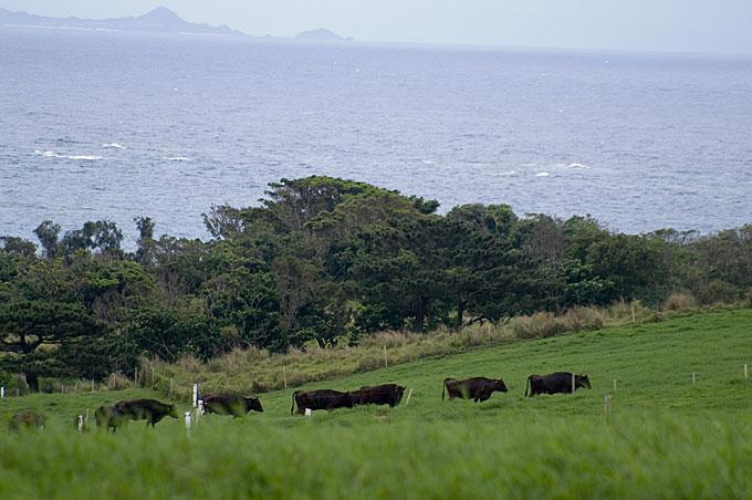 琉球の色 石垣島初日の北部探訪