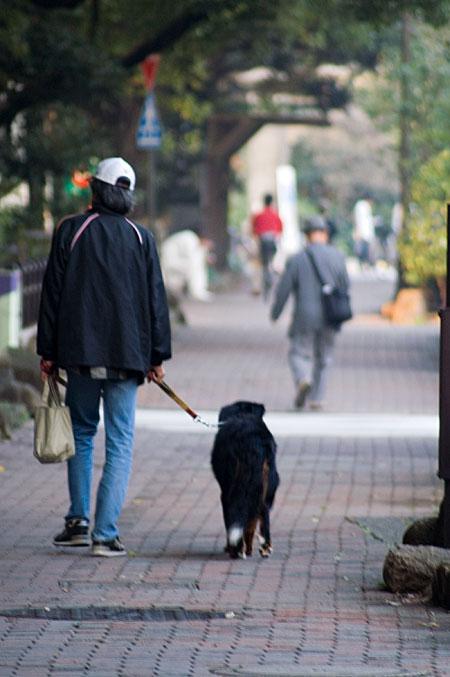 日比谷公園犬の散歩