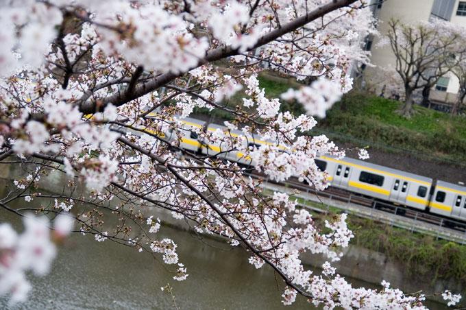 市ヶ谷桜と黄電車