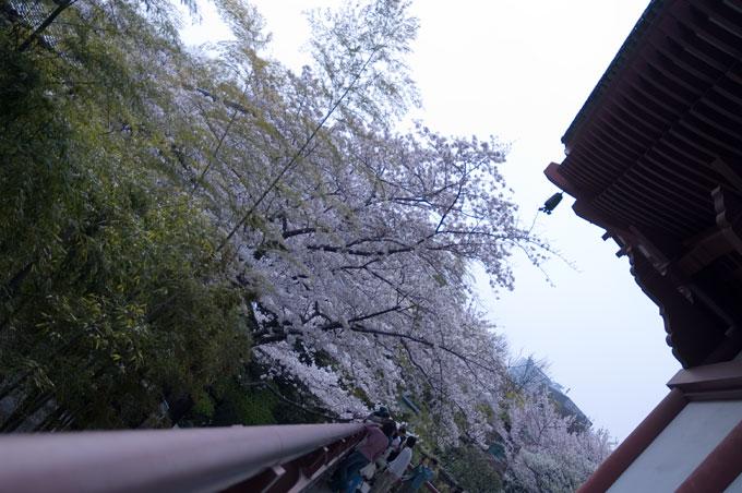 増上寺の裏側へ
