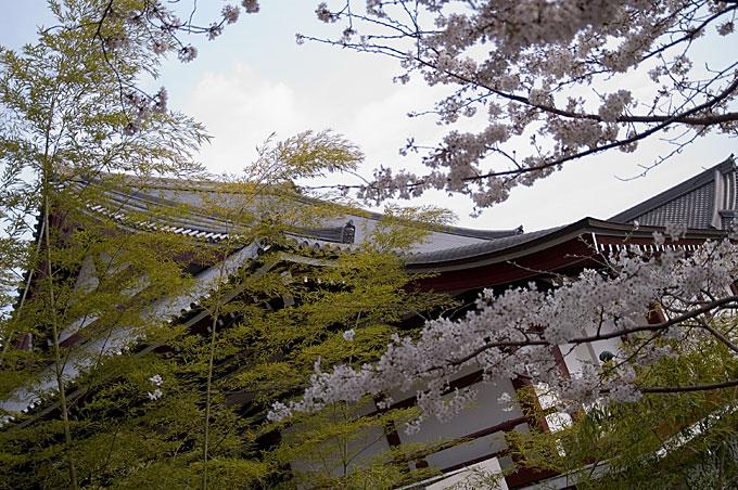 屋根と竹と桜