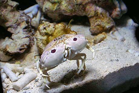 美ら海 魚2