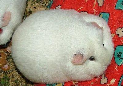 太りすぎ動物16