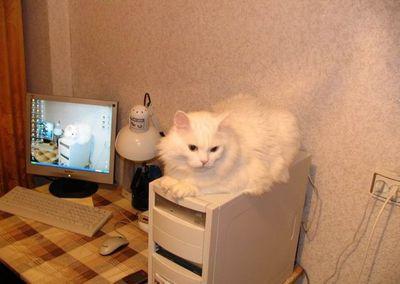 寒がり猫11