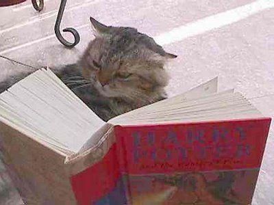 とても賢そうなインテリ猫たち05