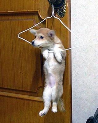 直立した犬猫12