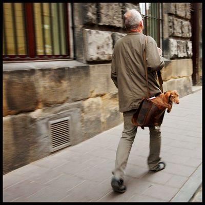 犬と離れられない人々13