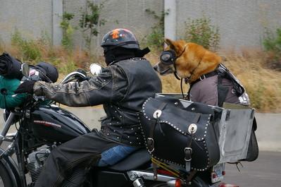 犬と離れられない人々22