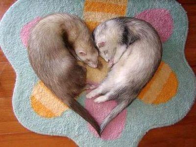 異常な愛し方や子作り法をする動物・生物TOP