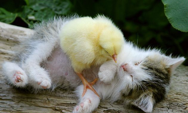 chick and kitty