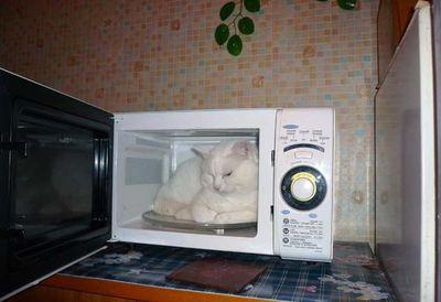 寒がり猫15