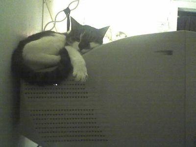 寒がり猫07