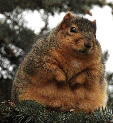 太りすぎ動物02