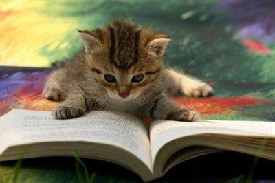 とても賢そうなインテリ猫たち04