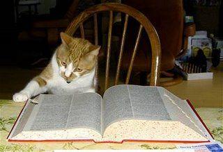 とても賢そうなインテリ猫たち02