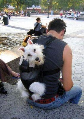 犬と離れられない人々08