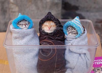 寒がり猫01