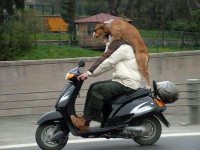 犬と離れられない人々15