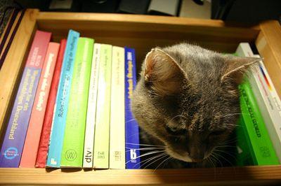 とても賢そうなインテリ猫たち13