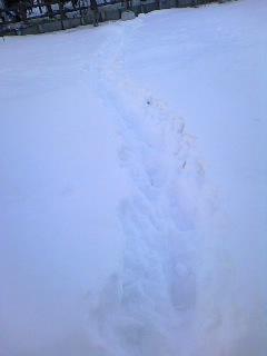 雪の上の足あとが、すみれ色に見えます。