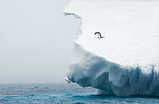 氷とペンギン