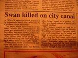 白鳥殺人事件
