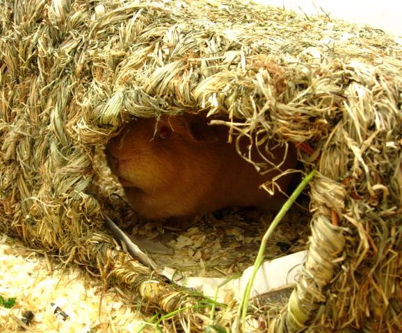 巣の中のゴラム