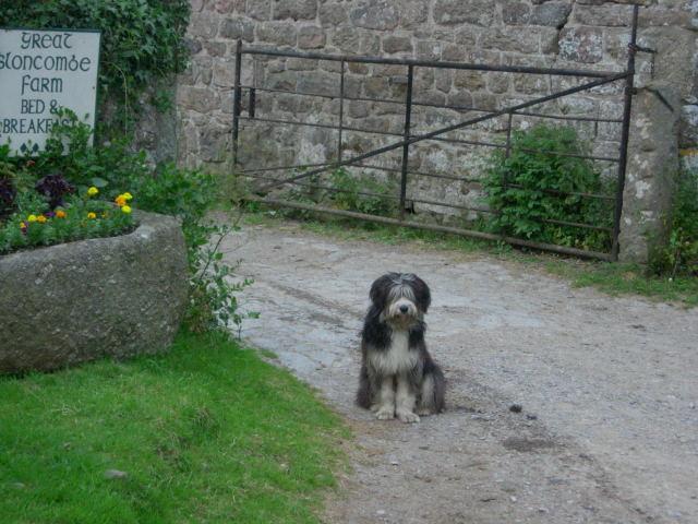 B&Bの犬