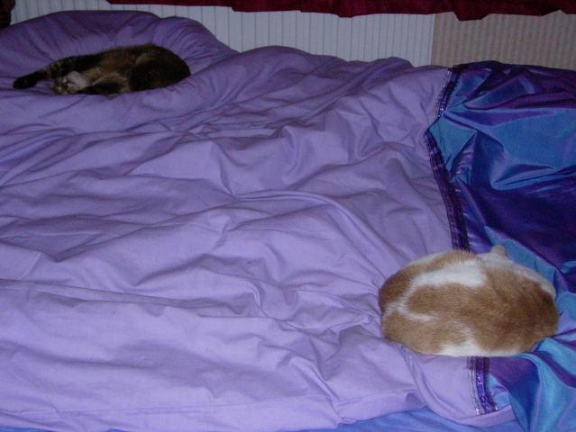 タマとDiglis、ベッドで