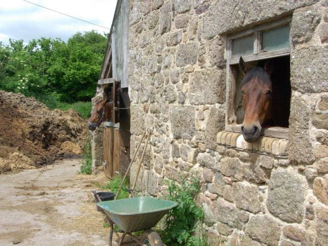 B&Bの馬