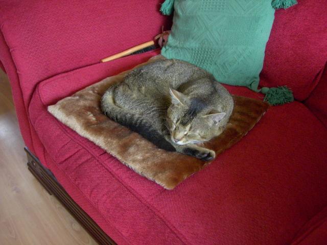 Diglisのベッド&タマ