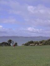 マリサと羊