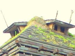 タンポポハウス