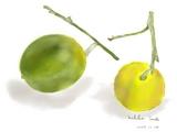 柚子とレモン