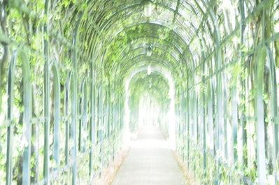 緑ノトンネル