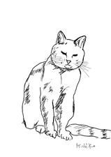 トタン屋根のネコ