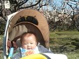 梅の木の下で