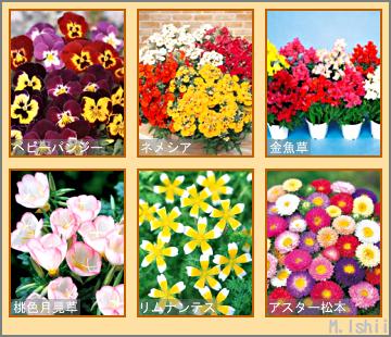 花のペット栽培観察記候補