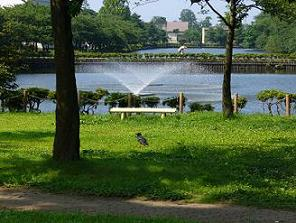 公園とカラス