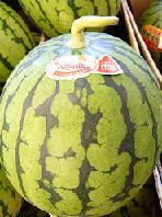 普通の西瓜