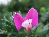 綺麗な花.JPG