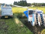田んぼで籾移動