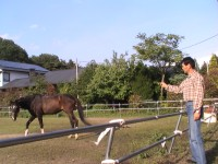 馬にエサをやる