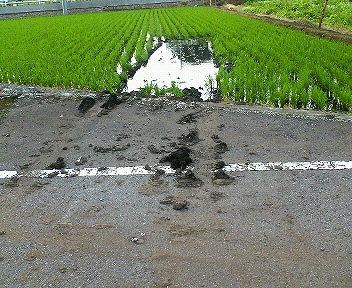 田んぼに突っ込んだ車の跡