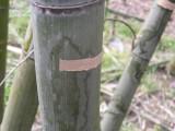 竹を枯らす