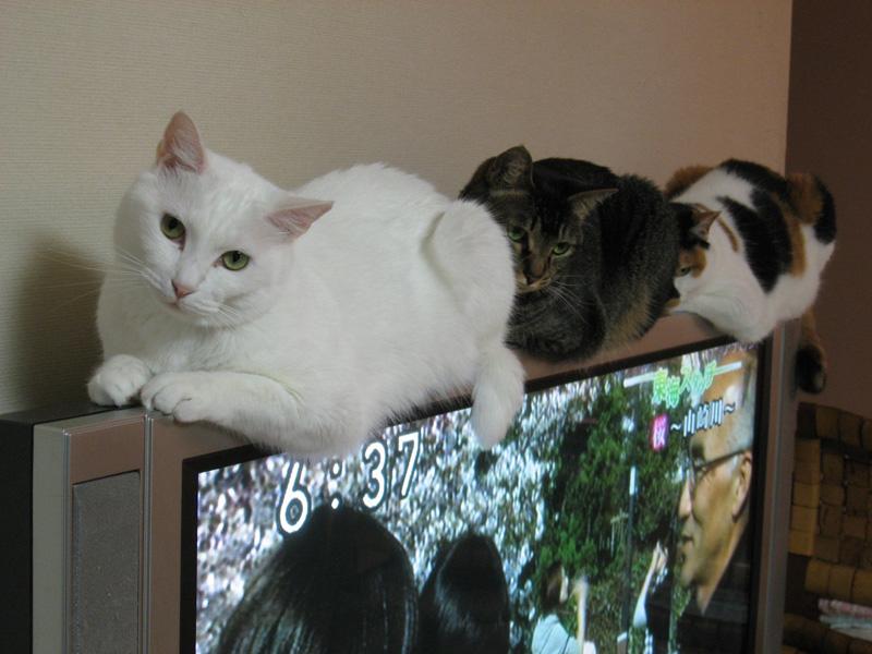 おいしそうな脚の女子校生 235脚目猫ガイジ隔離スレ [無断転載禁止]©bbspink.com->画像>4155枚
